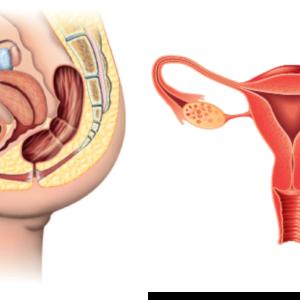 Anatomisk bildeblokk dame